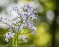 botanischer-garten-3-von-15