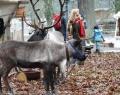 sababurg-weihnachtsmarkt-13