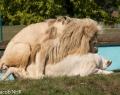 Safaripark Stukenbrock (11 von 43)