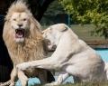 Safaripark Stukenbrock (12 von 43)