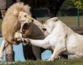 Safaripark Stukenbrock (13 von 43)