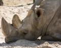 Safaripark Stukenbrock (14 von 43)