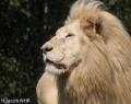 Safaripark Stukenbrock (15 von 43)