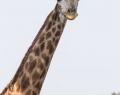 Safaripark Stukenbrock (19 von 43)