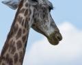 Safaripark Stukenbrock (20 von 43)