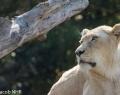 Safaripark Stukenbrock (4 von 43)