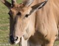 Safaripark Stukenbrock (5 von 43)