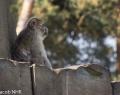 Safaripark Stukenbrock (8 von 43)