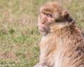 Safaripark Stukenbrock (9 von 43)