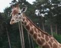 serengeti-park-11