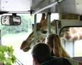 serengeti-park-12