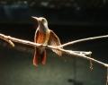 vogelpark-in-walsrode-11