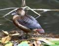 vogelpark-in-walsrode-13