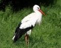 vogelpark-in-walsrode-14
