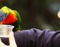 vogelpark-in-walsrode-16