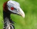 vogelpark-in-walsrode-2