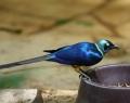 vogelpark-in-walsrode-21