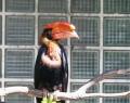 vogelpark-in-walsrode-22
