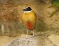 vogelpark-in-walsrode-24
