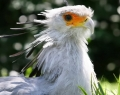 vogelpark-in-walsrode-3